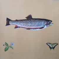 James Prosek, Brook Trout with Tiger Swallowtail Butterfly, 2009, Watercolor, gouache, colored pencil and graphite on tea-stained paper, 21 x 26 inches